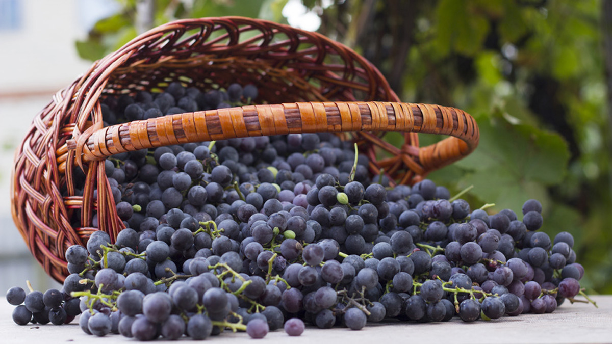 benefits of resveratrol
