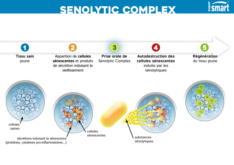 Illustration du fonctionnement de Senolytic Complex